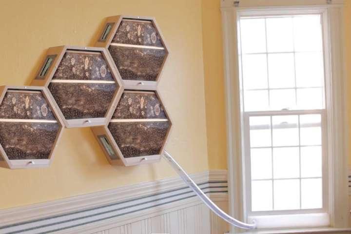 Colmeia modular tem design hexagonal e é ligada à janela da casa por um tubo