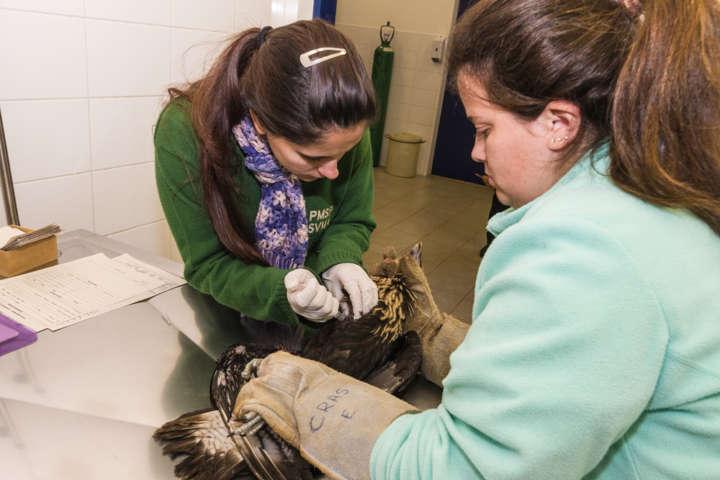 Animais silvestres encaminhados ao DEPAVE recebem atendimento veterinário emergencial
