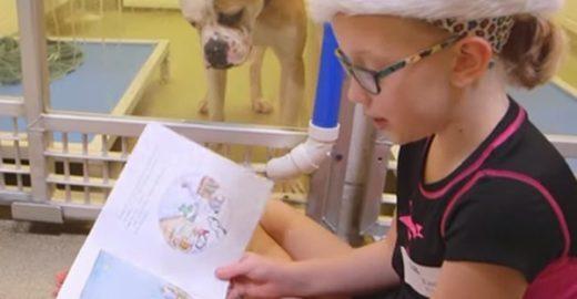 Crianças contam histórias para cachorros vítimas de maus-tratos em abrigo