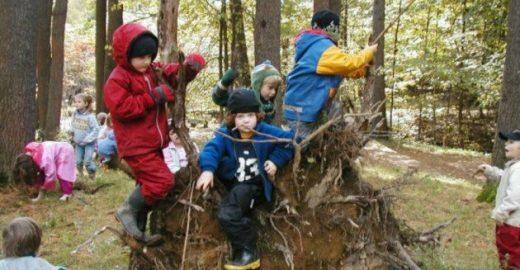 Um dia por semana 100% dedicado à exploração da natureza: conheça essa escola