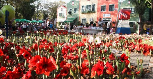 Expoflora, em Holambra, vende ingressos promocionais a R$ 19