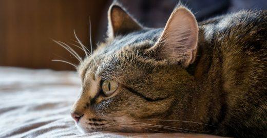 Estresse e ansiedade de médica diminuíram após adoção de gatinha