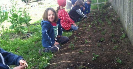 Em escola agrícola no meio da cidade, crianças aprendem a plantar o que vão comer