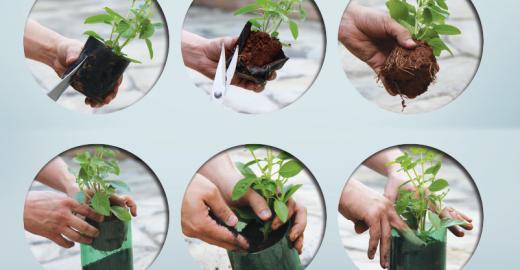 Guia de horta caseira quer incentivar uso de ervas aromáticas em substituição ao sal
