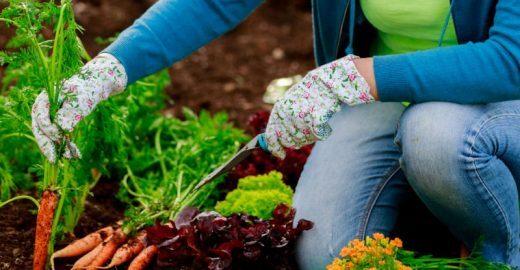 Cidade gaúcha mantém horta orgânica para <br>utilização em merendas de escolas públicas