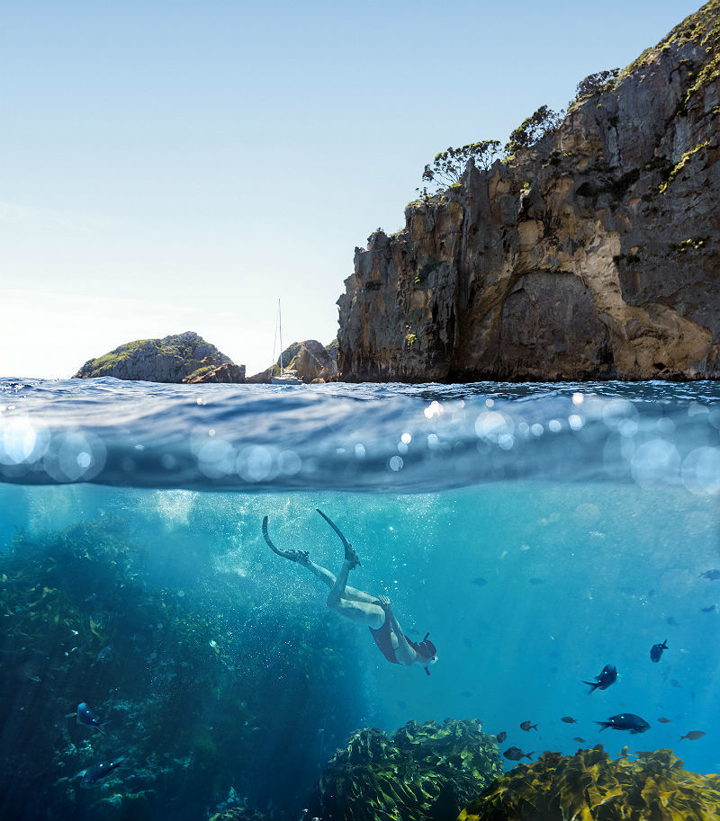 Mergulho nas Ilhas Poor Knights