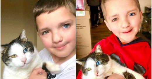 Destino: mãe encontra gato com as mesmas características do filho