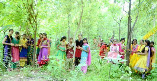 Na Índia, aldeia planta 111 árvores para cada menina que nasce