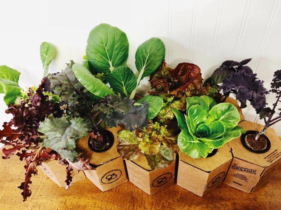 Diversos tipos de ervas e verduras orgânicas podem ser cultivados