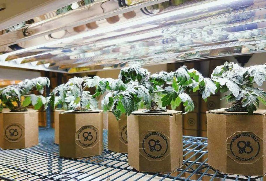 As verduras orgânicas são colhidas apenas na hora de comer, mantendo o frescor