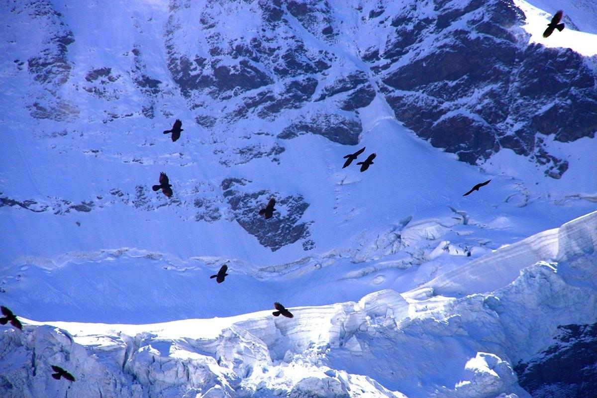 Pássaros sobre o Glacial Aletsch, na Suíça