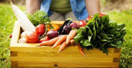 Feira agroecológica leva hortaliças e frutas orgânicas ao Sesc