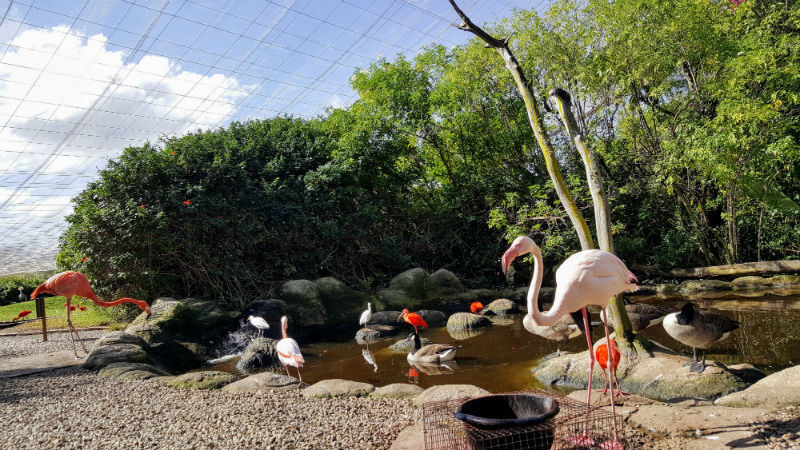 O Birds of Edené lar de mais de 3.500 aves de 220 espécies
