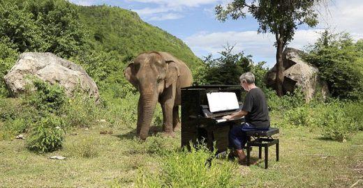 Elefanta cega aprecia música clássica em santuário na Indonésia