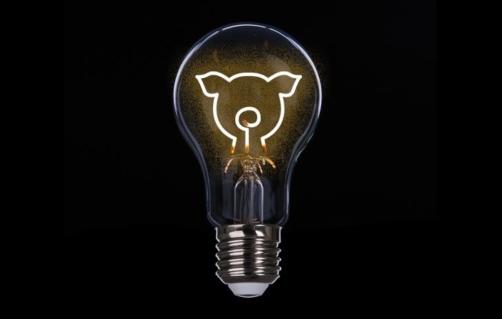 A energia vegana vai te dar uma luz livre de qualquer insumo de origem animal