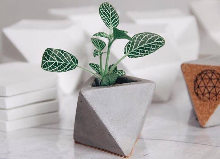 Planta em um vaso branco