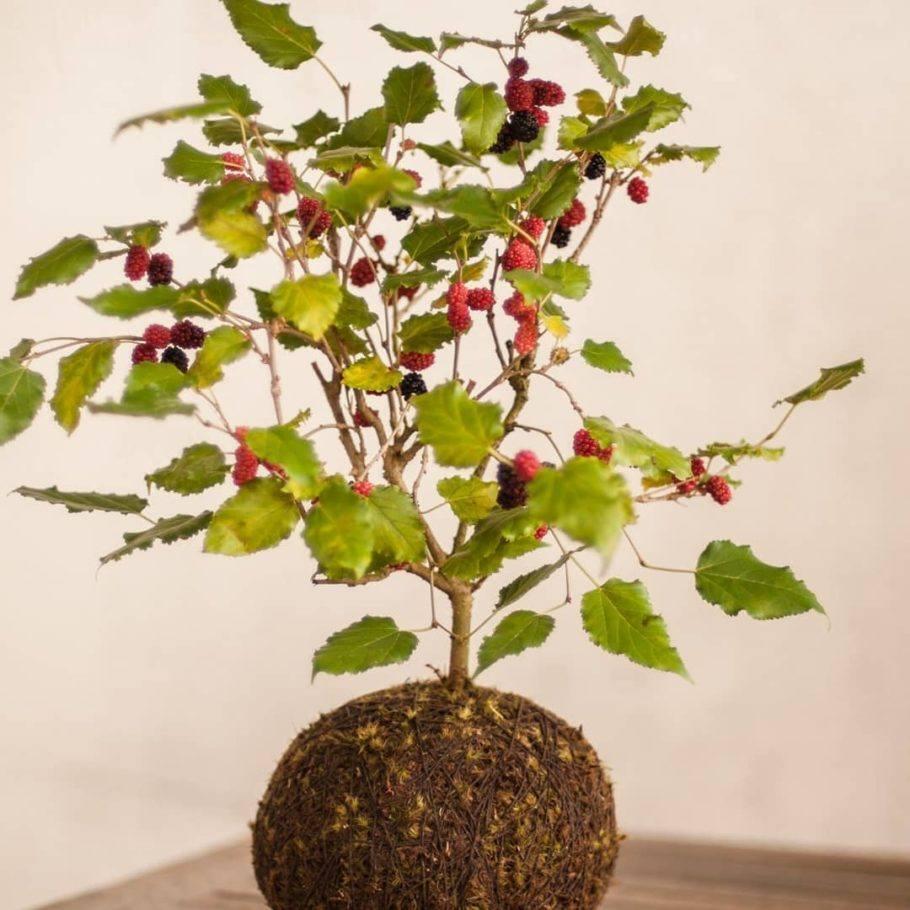 Bola de musgo com planta vermelha e verde