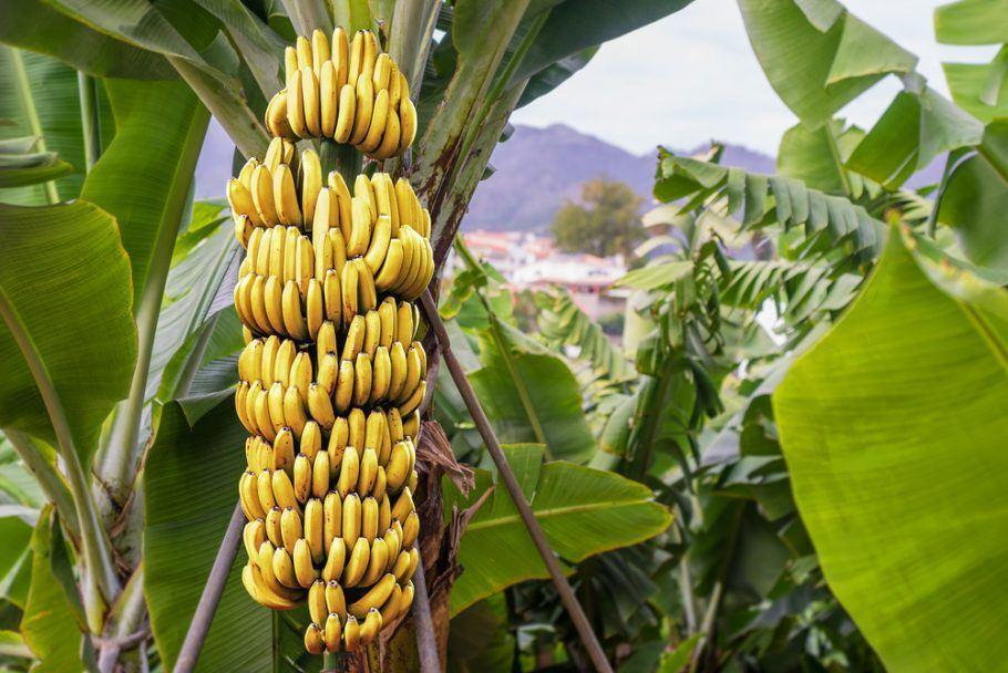 A Apeel pode ser ajustada para ser aplicada em aspargos, bananas, maçãs, mandiocas, mangas e morangos