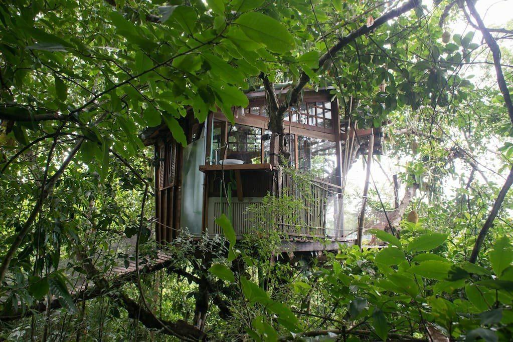 No meio da Mata Atlântica, casa na árvore foi projetada para não ferir a jaqueira de mais de 30 metros