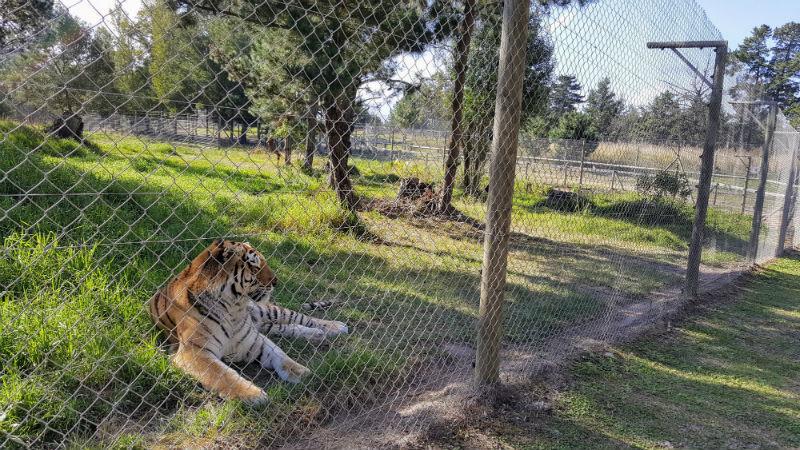 Tigre no Jukani
