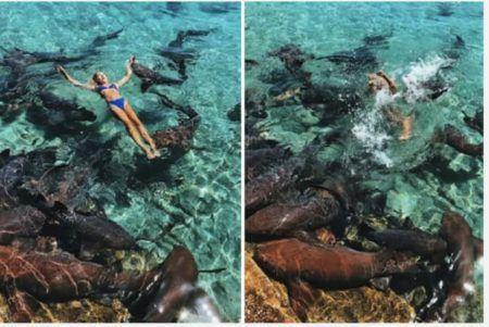 Katarina Zarutskie atacada tubarão