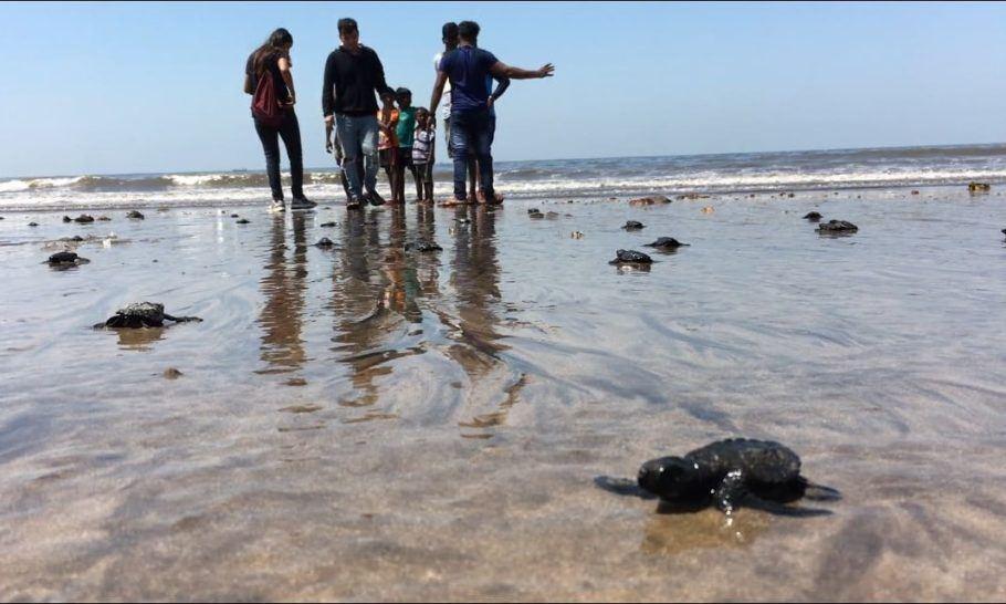 O advogado Afroz Sahah retira lixo plástico da praia de Versova há dois anos