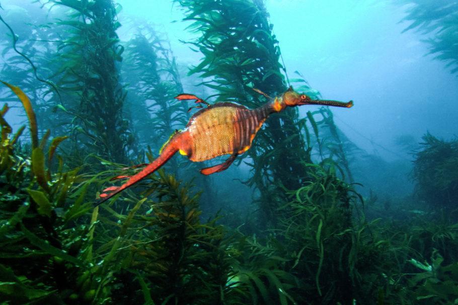 Filme 'Triste Oceano', que será exibido na Mostra Ecofalante de Cinema Ambiental