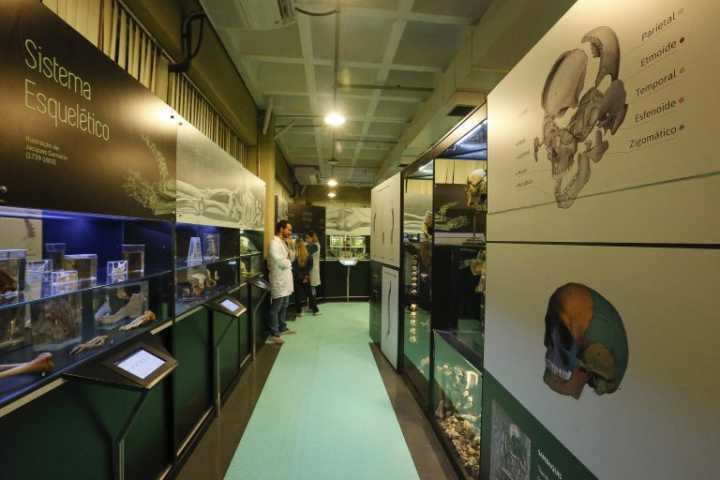 O Museu de Anatomia Humana conta com mais de mil itens expostos, que vão de membros e órgãos, até cadáveres