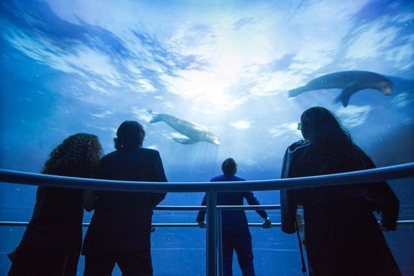 Os efeitos visuais e sonoros do National Geographic Encounter foram desenvolvidos por uma equipe de artistas premiados.