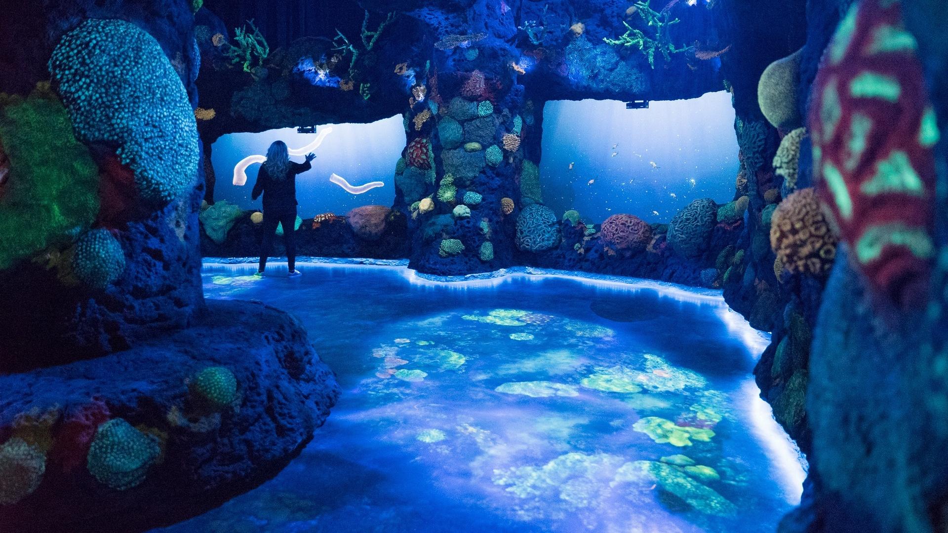 Projeção simula o anoitecer numa barreira de corais no Pacífico