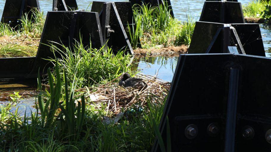 Ave descansa em meio à vegetação do parque flutuante
