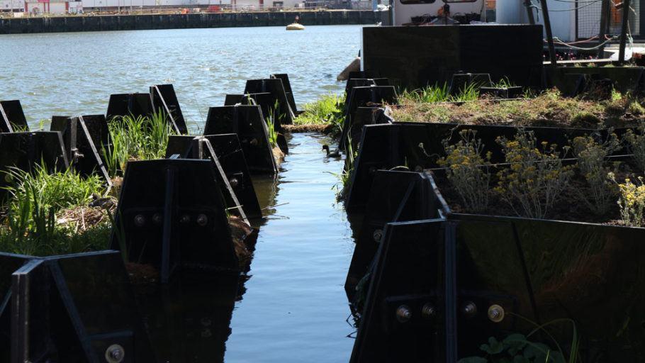 Canal com meio metro de profundidade abriga a fauna aquática