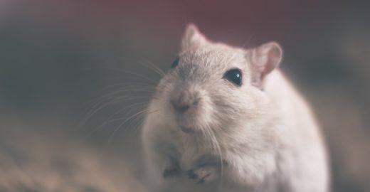 Estatísticas apontam redução de experimentos em animais vivos