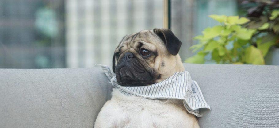 No hotel Knickerbocker os cães desfrutam de suas próprias camas e deliciosos petiscos