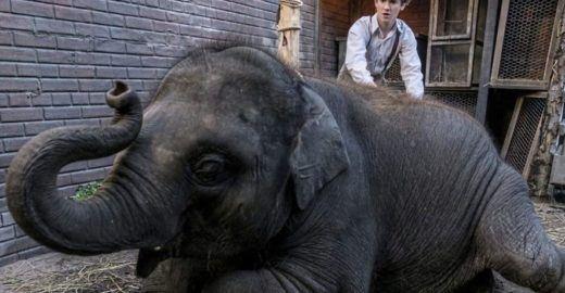 Por respeito aos animais, PETA pede boicote ao filme 'Zoo'