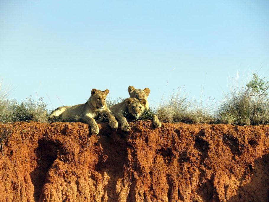 Tendas ficam na reserva Amakhala, onde os animais estão no habitat natural na África do Sul
