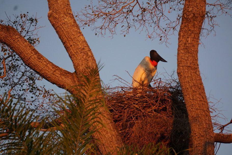 52a9085e4 Crédito: Upside TravelO Pantanal preserva uma quantidade enorme de vida  selvagem convivendo em paralelo com a pecuária extensiva