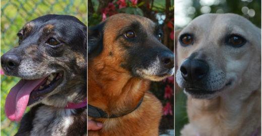 Após perder terreno, ONG faz campanha para adoção de cachorros