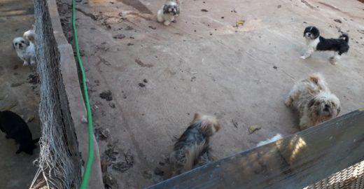 PM resgata cães em situação de maus-tratos em canil clandestino