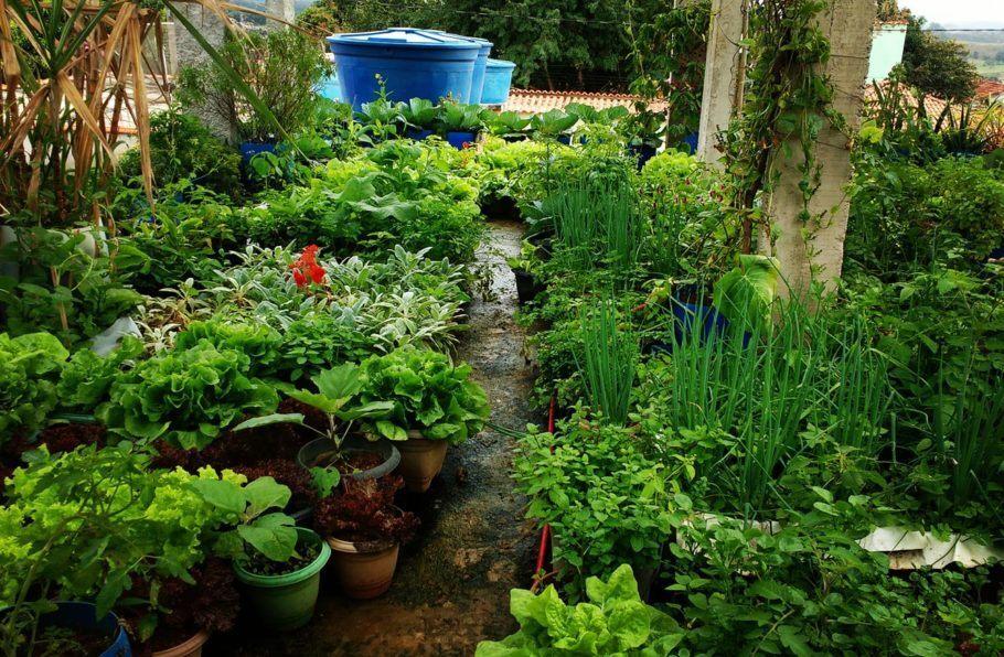 A horta na laje conta com sistema de aproveitamento da água da chuva