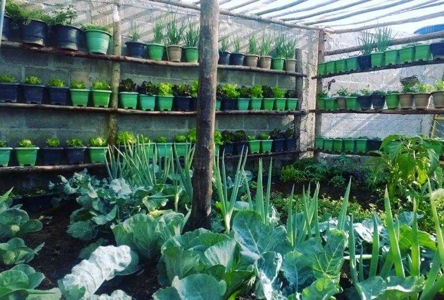 As espécies da horta na laje ocupam vasos e canteiros