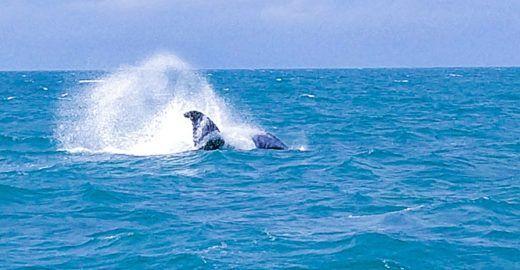 Abrolhos e baleias jubarte atraem turistas no sul da Bahia