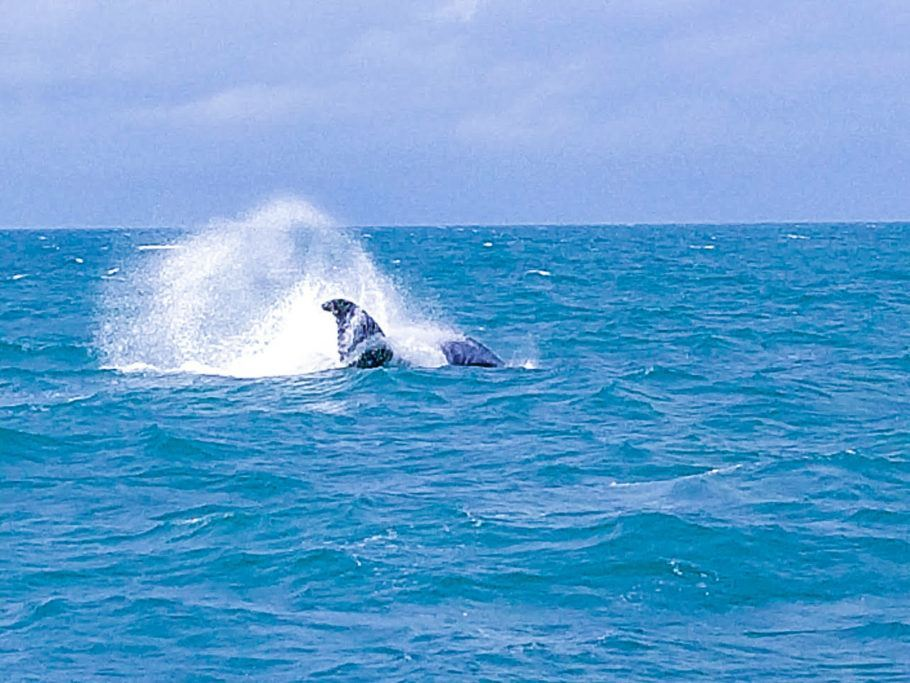 Baleias em Abrolhos