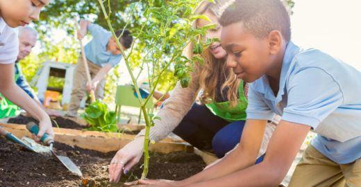 5 razões para se ter uma horta em toda escola de ensino infantil