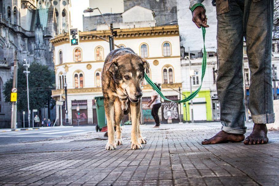 Morador de rua e seu cão