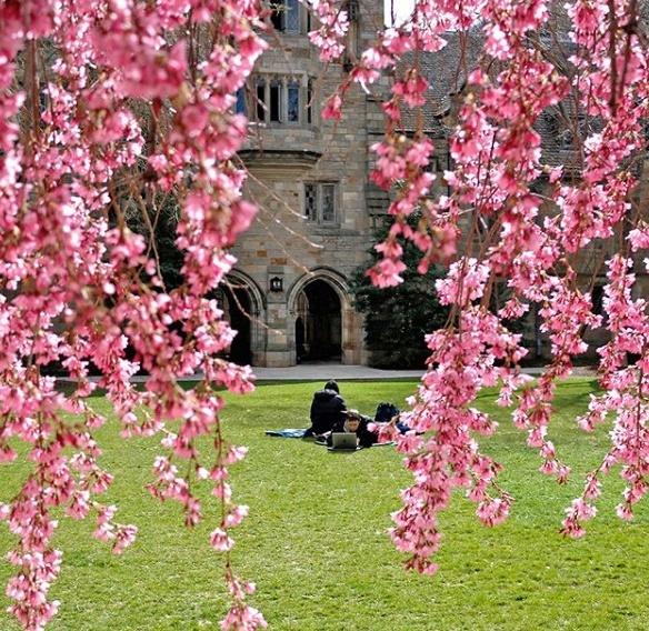 árvore florida na universidade de Yale com alguns alunos no gramado
