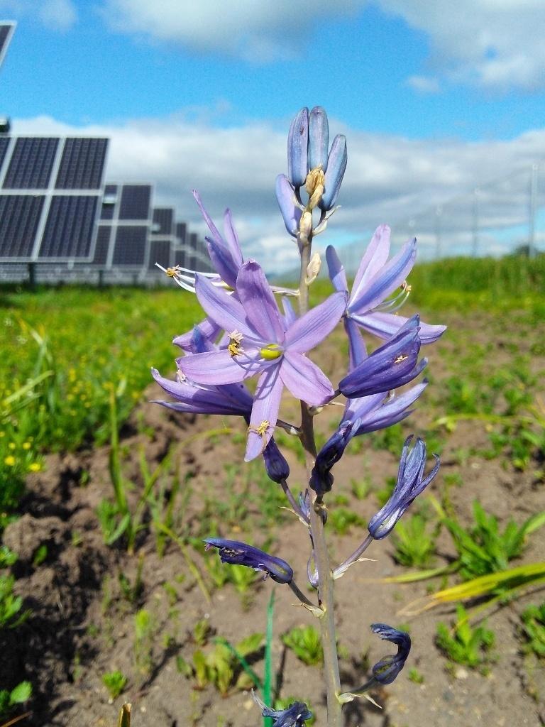 Abelhas encontram um novo lar no apiário solar Eagle Point, no Oregon