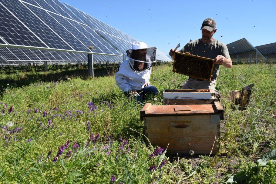 Insetos podem ajudar na polinização da vegetação e dos cultivos agrícolas da região