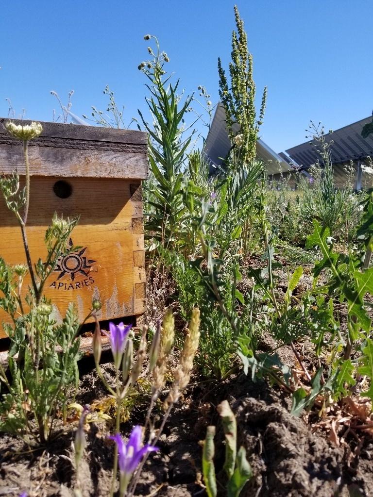 Flores nativas, que atraem as abelhas, compõem a paisagem da fazenda solar