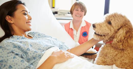 PL autoriza paciente a receber visita de animais em hospitais